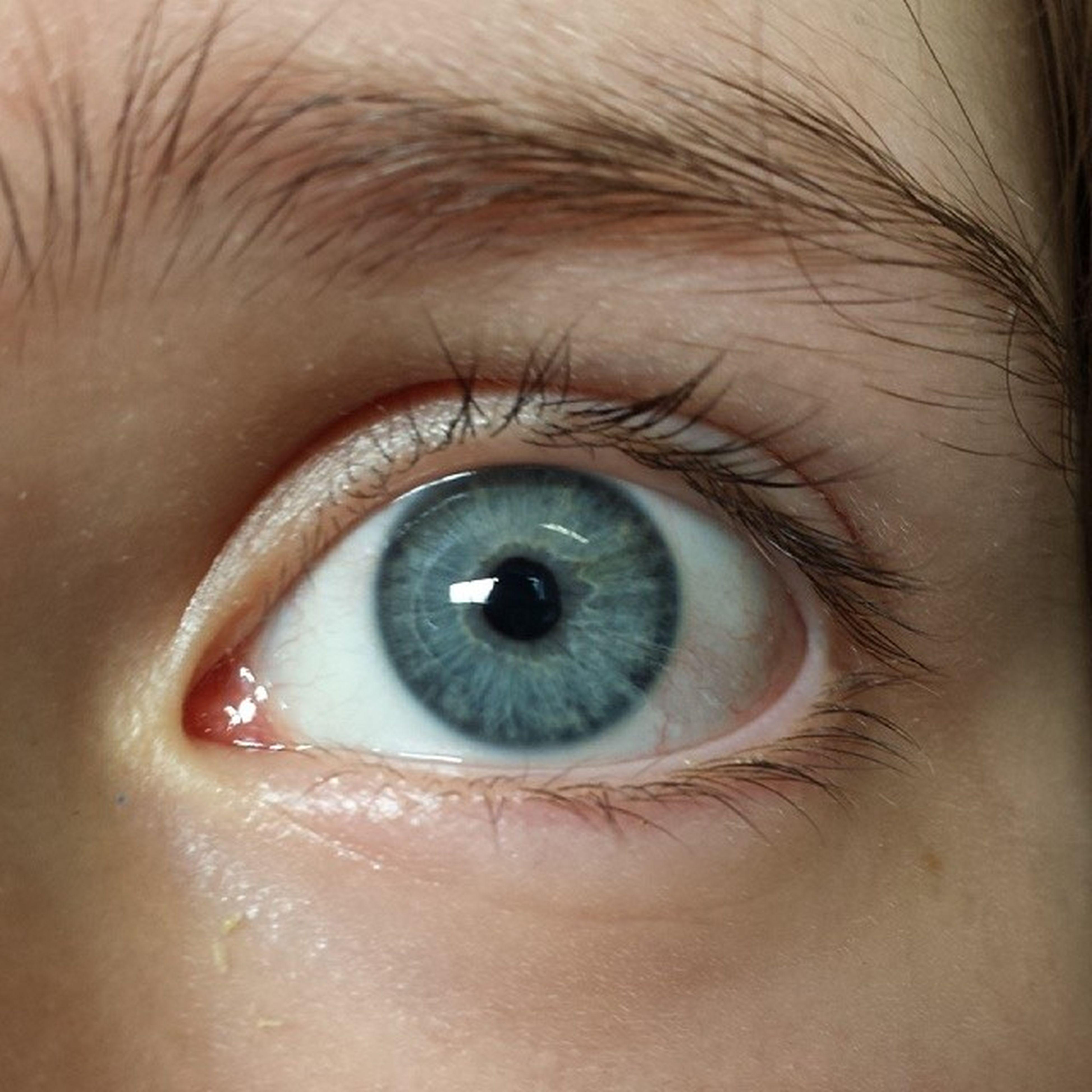 human eye, eyelash, eyesight, close-up, sensory perception, part of, extreme close-up, iris - eye, eyeball, human skin, looking at camera, full frame, portrait, extreme close up, eyebrow, person, vision