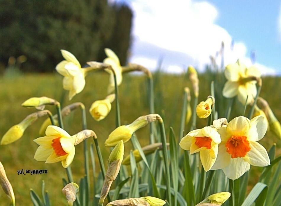 Nationaltrust Suffolk Exploring Travel Flowers