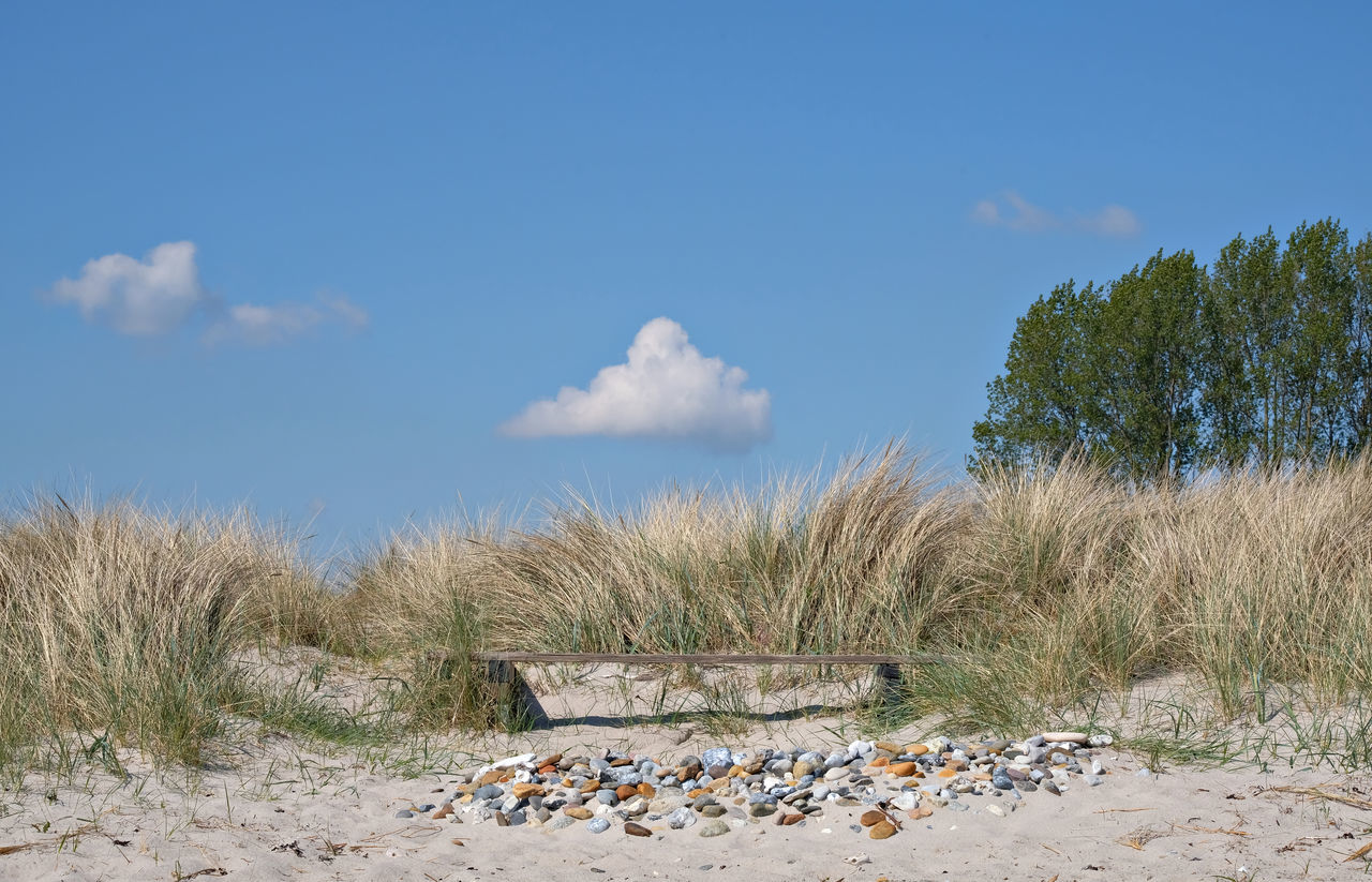 Beach Beauty In Nature Clear Sky Day Deserted Fluffy Clouds Grass Marram Grass Nature No People Ostsee Ostseebad Dahme Ostseeküste Outdoors Pebbles Preseason Sand Sand Dune Scenics Sea Sky Tranquil Scene Tranquility Vacation Wooden Bench