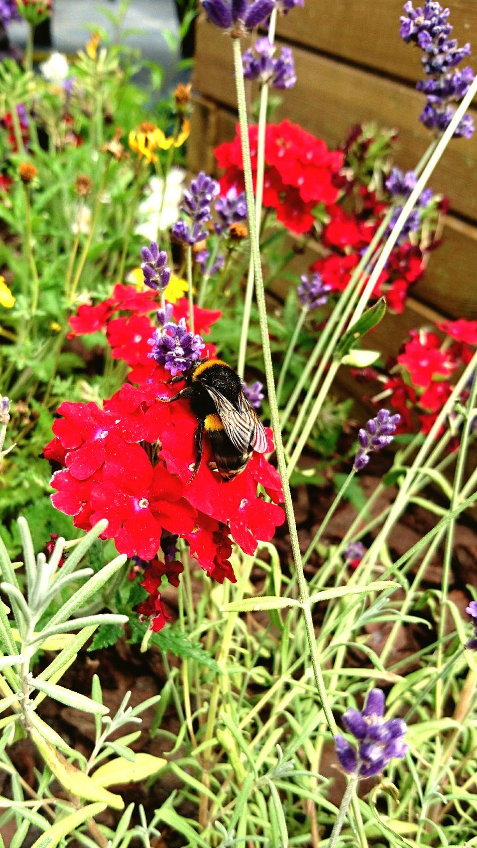Helping the big guy out Nature Birdsandbees Flowers Summer Sun Garden Photography First Eyeem Photo