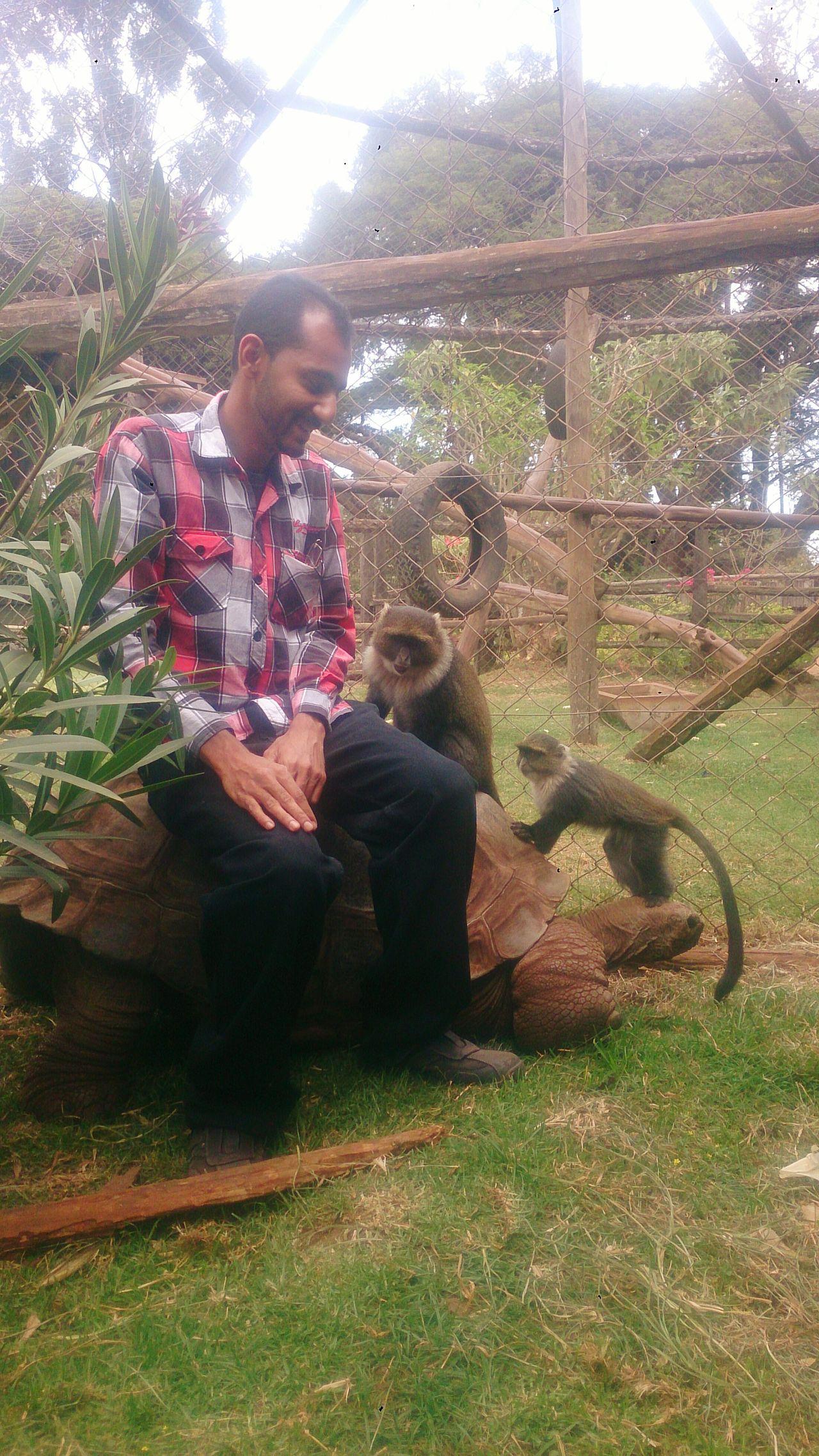 Nature Wildlife Giant Tortoise Monkey