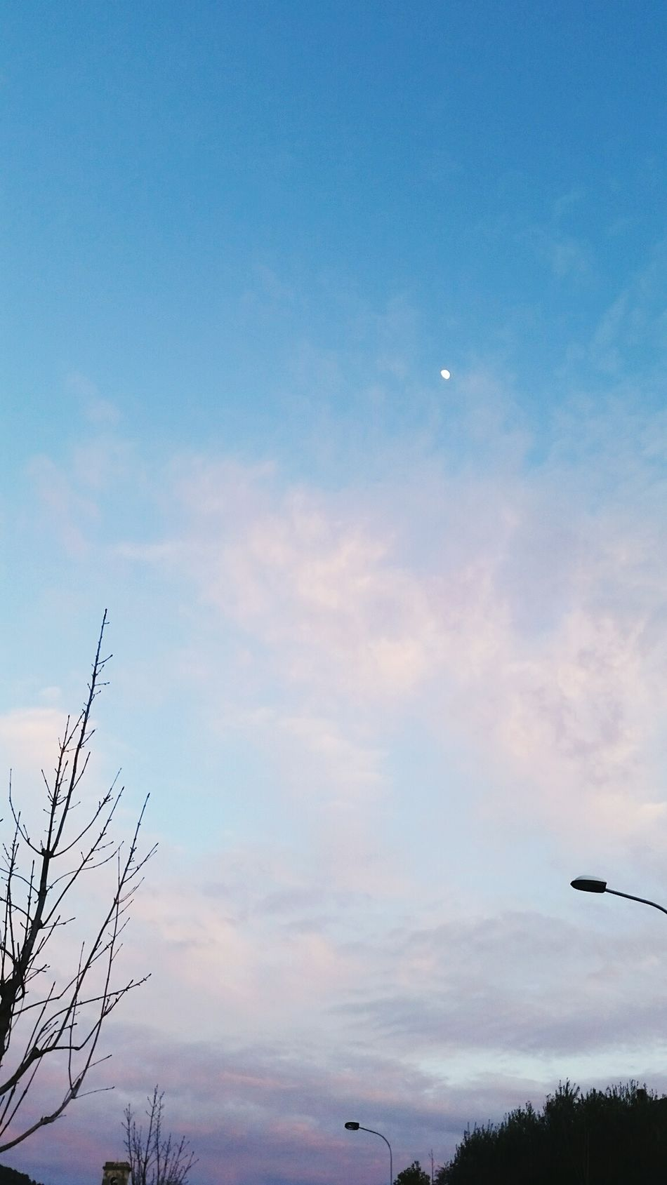 Moon Moonlight Cloud Clouds And Sky Clouds Cloudy Sky Sky And Trees Sky_collection Lantern Blue Blue Sky Light Shadow Beautiful Street Lovely View Nuvola Pink NuvoleRosa Perfect Albero Rami Lampione