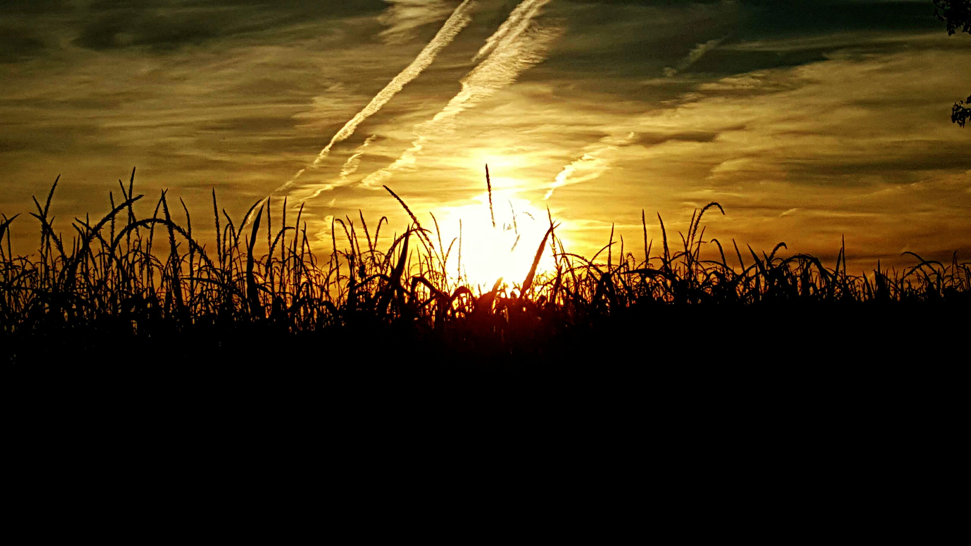 sunset, silhouette, tranquility, tranquil scene, sky, scenics, beauty in nature, nature, orange color, plant, sun, idyllic, dark, landscape, cloud - sky, field, growth, sunlight, outdoors, no people