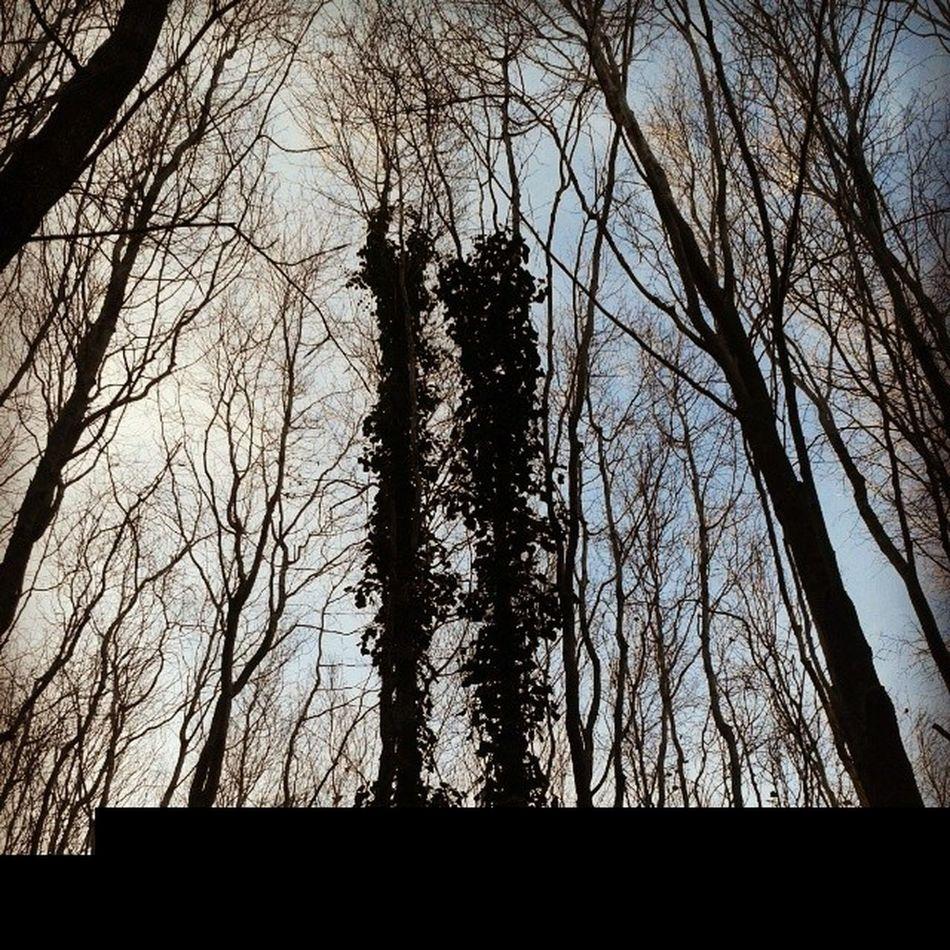Trees & Sky Adampol Polonezkoy istanbul turkey