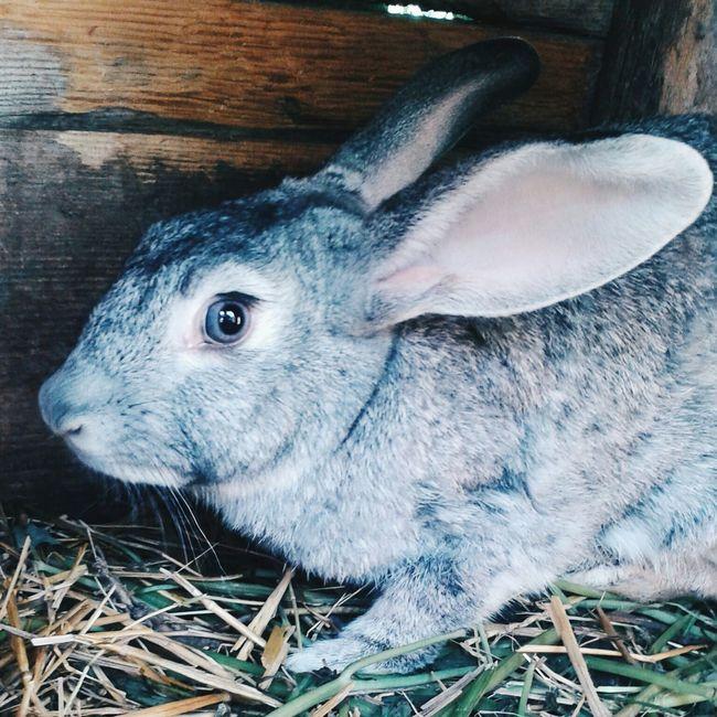 крольчиха серый пре Вау Relaxing Hi!