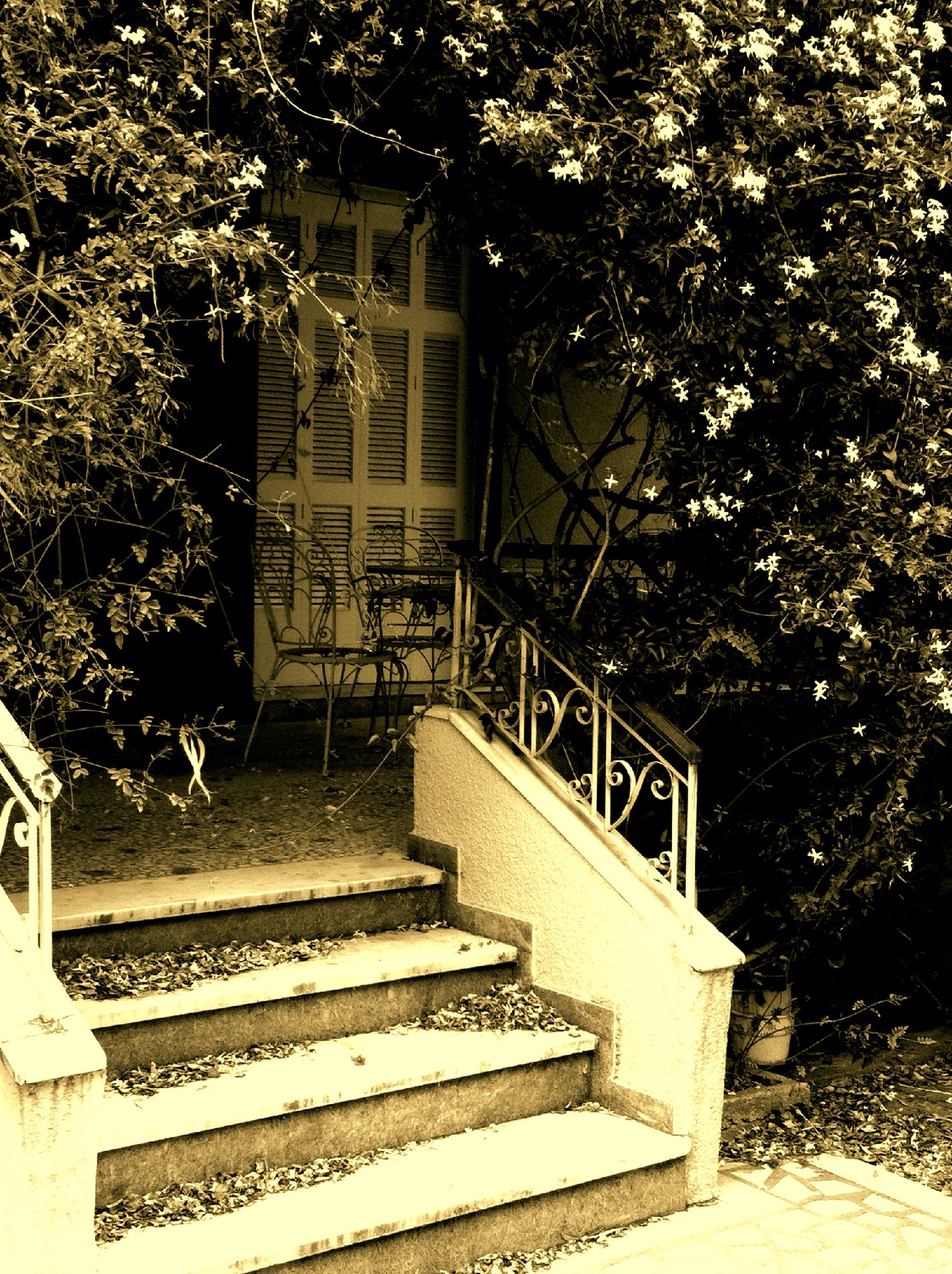 steps, built structure, tree, architecture, bench, staircase, building exterior, empty, steps and staircases, plant, growth, house, railing, absence, chair, entrance, sunlight, day, wood - material, park - man made space