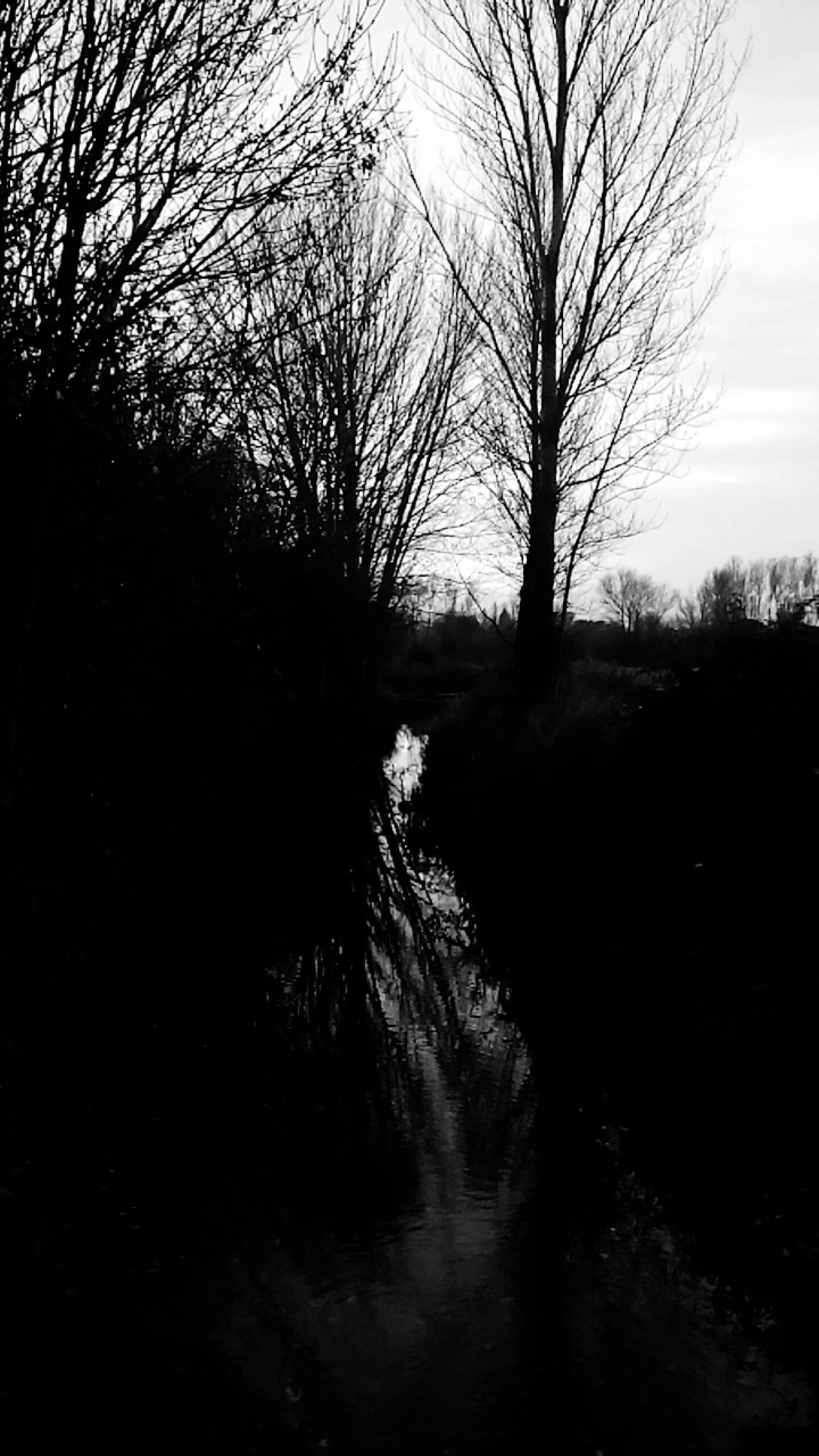 Acequia SPAIN España LeonEsp  Pictureoftheday Españoles Y Sus Fotos Streamzoo Family Taking Photos Black & White Photography Tree Reflection Water Outdoors No People Sky