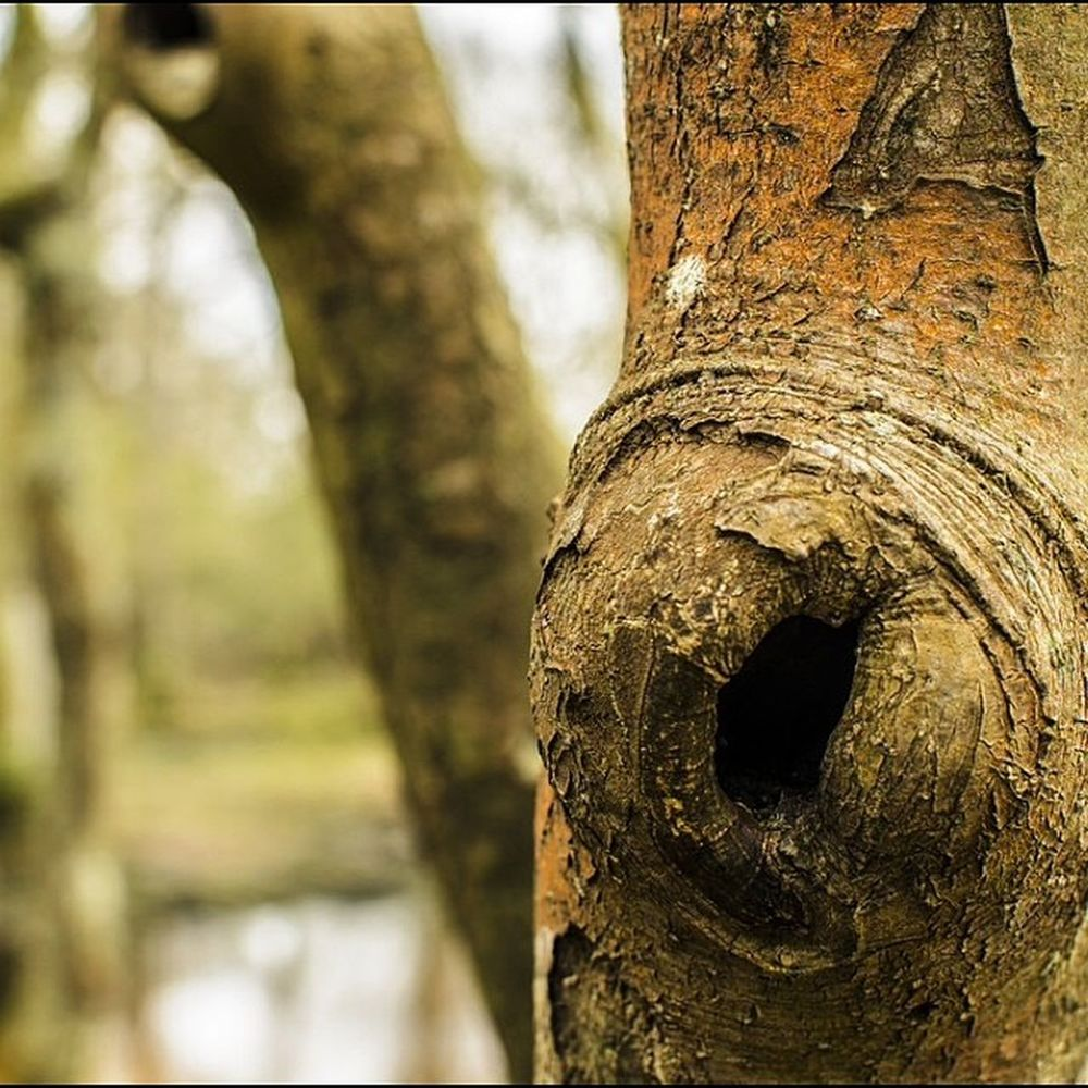 Treeknot Knot Tree Nature bark forest closeup woodland newforest england nikon nofilter noeffects photography