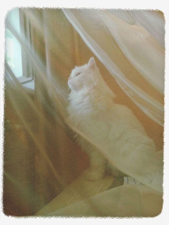 my kitty posing ))) First Eyeem Photo