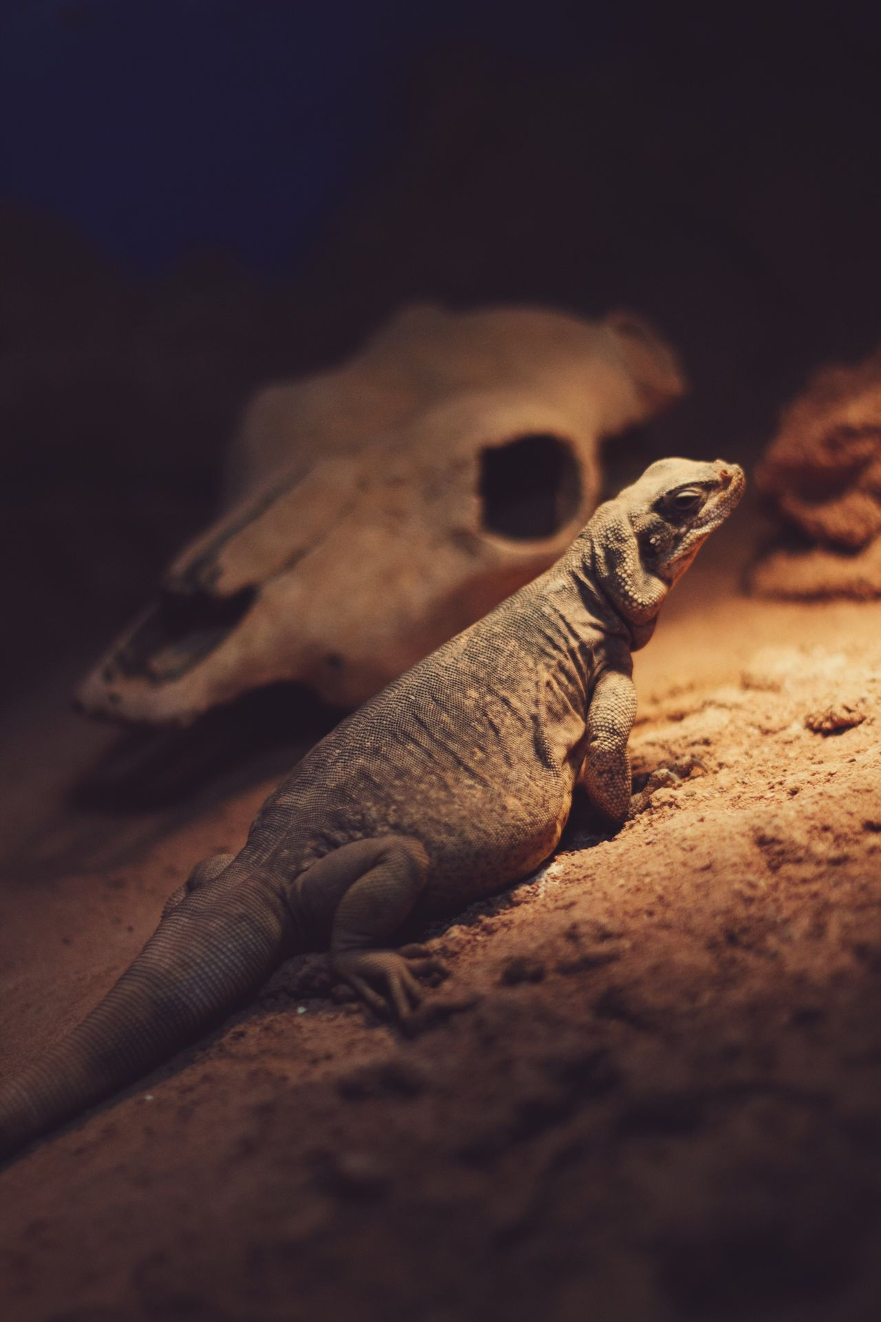 Selective Focus Close-up Dead Animal Shore Man Made Object No People Tranquility Snout Majestic Zoology Beauty In Nature Nature Wildlife Animals In The Wild Rock