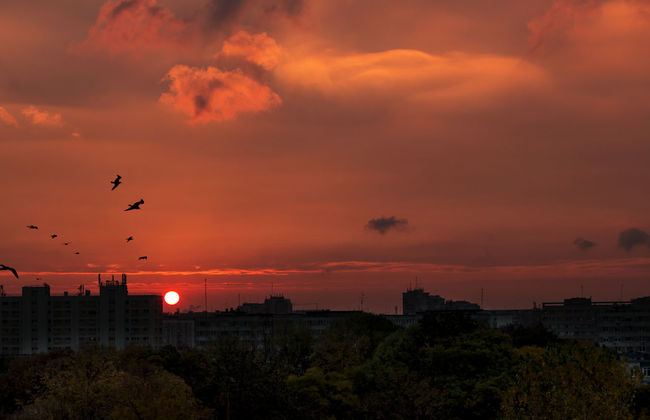 finally appeared after a week absence(the sun). Beauty In Nature Bird Colorful Dramatic Sky Flying Nature Outdoors Silhouette Sky Sunrise Vacations