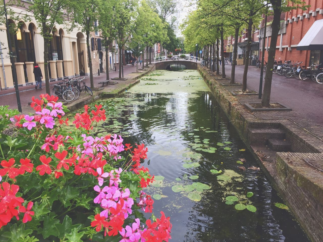 water, flower, outdoors, growth, plant, nature, day, no people, tree, architecture