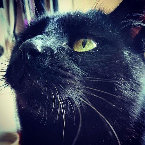 Strolch Tiere♡ Katze Wildlife Catsmosh Makro Schwarzerkater My Cats Makro Photography Cats 🐱 Experimental Photography Makrografie Katzenfoto Meine Katzen EyeEm Animal Lover Tierisch Schön Katzenaugen