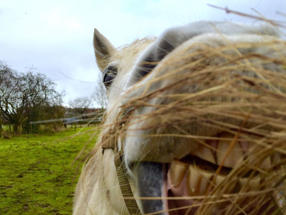 Smiling Eating Gras Hanging Out Taking Photos Horse Cheese! The Week On EyeEm