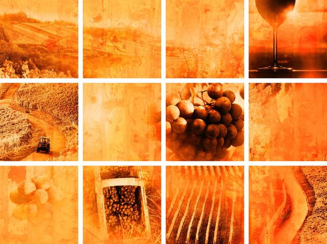 wine collage old style Autumn Backgrounds Collage Colorful Drinks EyeEm Gallery Field Grapes Landscape Landscapes With WhiteWall Montage Montage Photography Nature No People Outdoor Pictures Photo Montage Riesling Sepia Summer Vineyard Vintage Wine Wine Farm Wineglass Winery