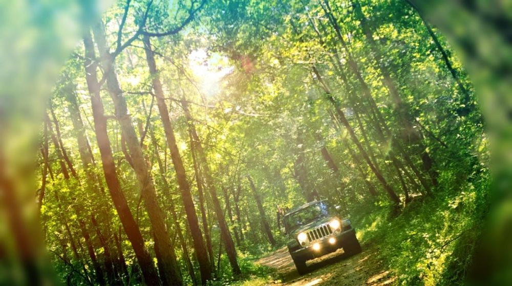 Nature Tree Forest Outdoors Tranquil Scene Beauty In Nature No People Tranquility Rural Scene Day Freshness Lifestyles Driving Nature EyeEm Selects Jeep Landscape Tree Jeep Tours Jeeplove jeep #wrangler #pride and joy Jeep Life ❤ JeepneyMoments Jeepwrangler Jeep Wrangler Unlimited JeepSummer