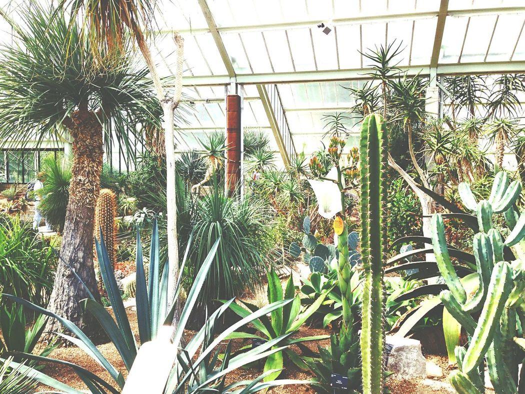 Royal Botanic Gardens Royal Garden London Kaktus Kew Gardens Botanic Gardens Gardens Plants England Great Britain