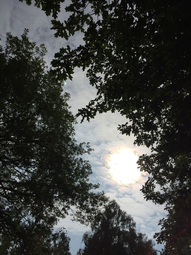Beauty In Nature Cloud - Sky Day Low Angle View Nature Sky Sun Tree