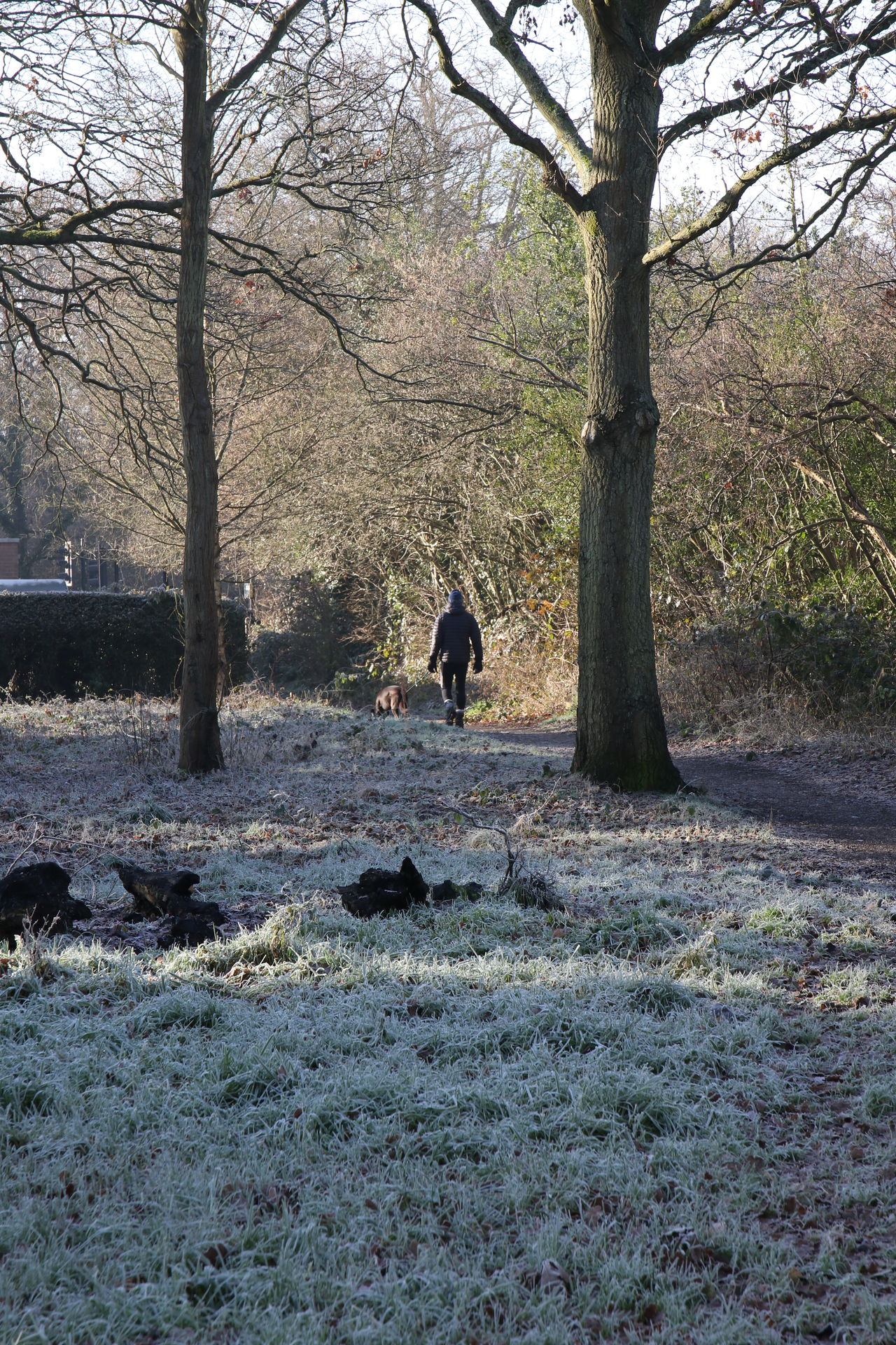 Beauty In Nature Day Dog Dog Walker Domestic Animals Frost Frosty Morning Nature Outdoors Sunlight Surrey Countryside Tree Walking Water