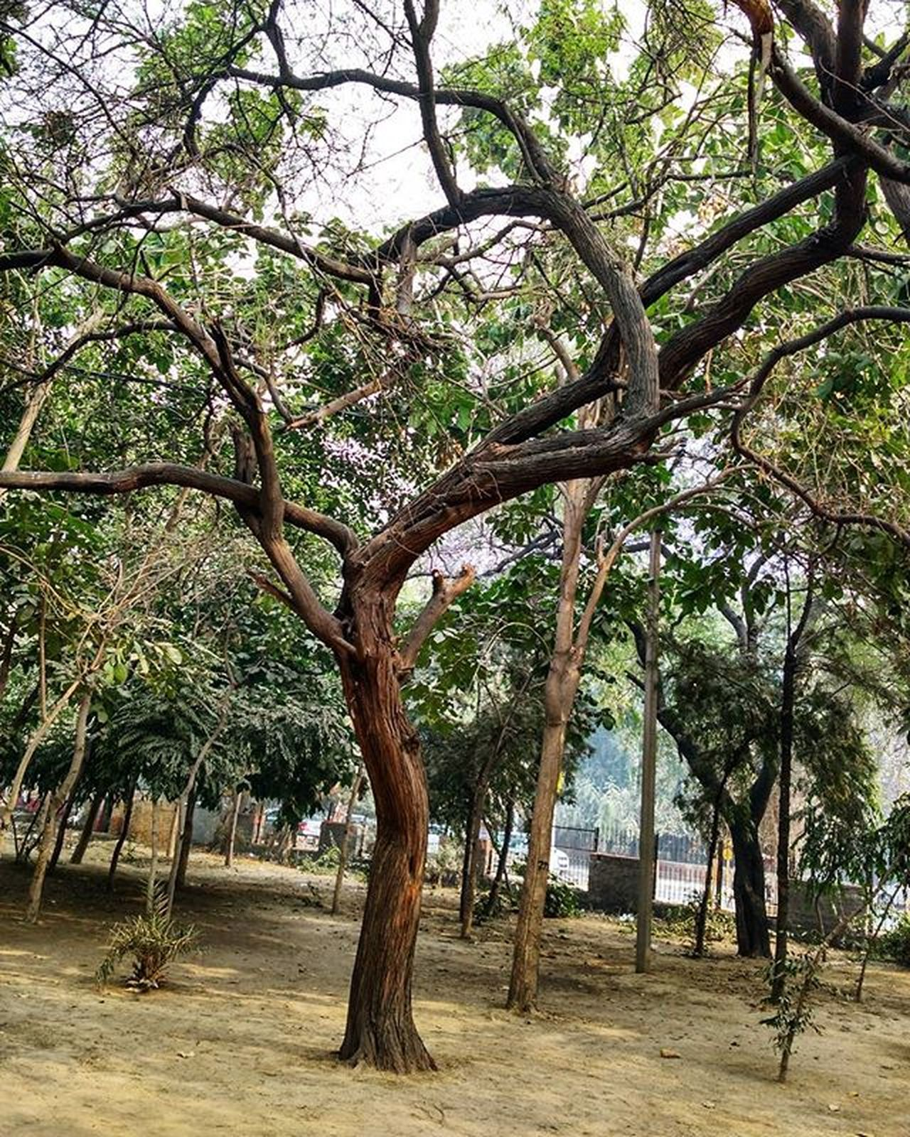 T R E E Tree Trees Nature Naturephotography Photography Instagram Instagood Instalike Instapic Doubletap India Indian Park Sky Wilderness Phonography  Mi4photography Mi4phonography Mi4