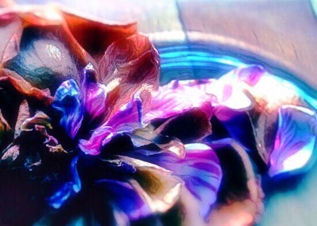 Light Of The Sun Purple Pink Flower 山茶花 Sazanqua Japanese  Hello World