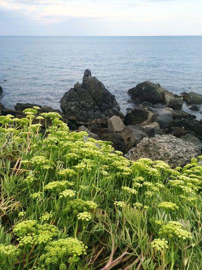 Finally Summer! Vacation Time Sicily Acitrezza  Sea Volcanic Rock Incredible Vegetation Summer Vibes Summer Views