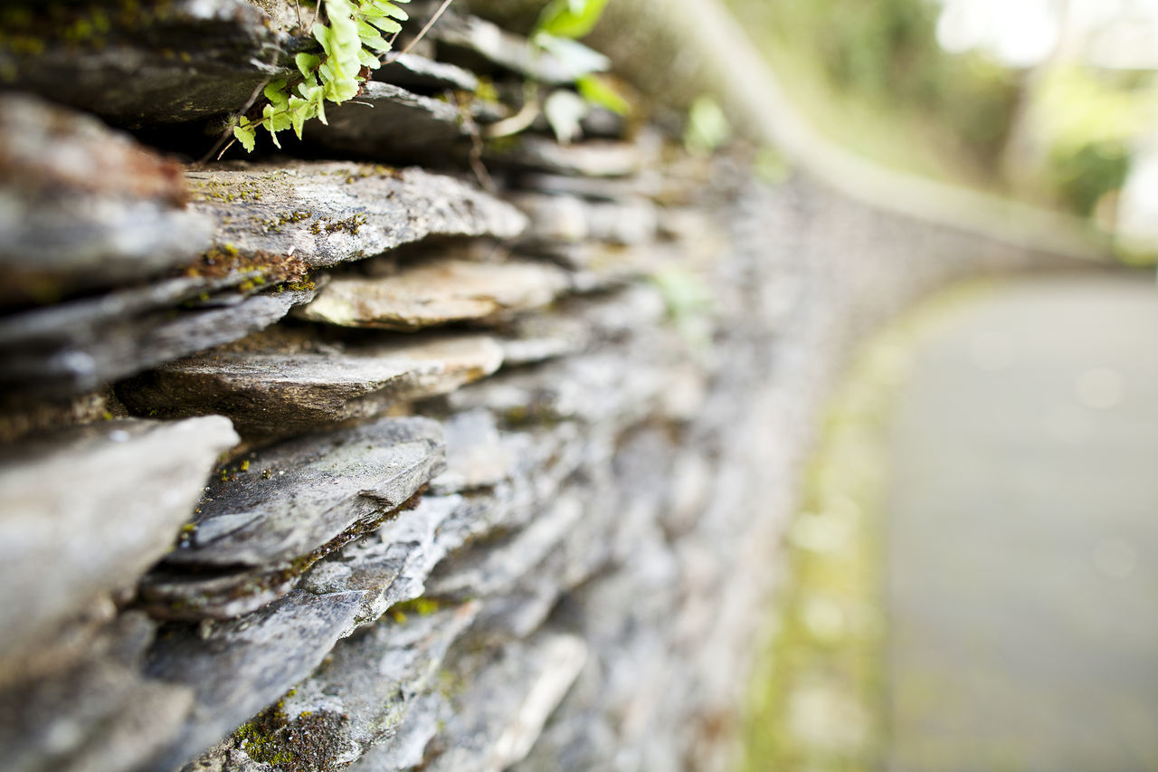 Beauty In Nature Birch Tree Close-up Day Deforestation Forest Growth Log Nature No People Outdoors Paths Stone Textured  Timber Tree Tree Trunk Wall Wood - Material