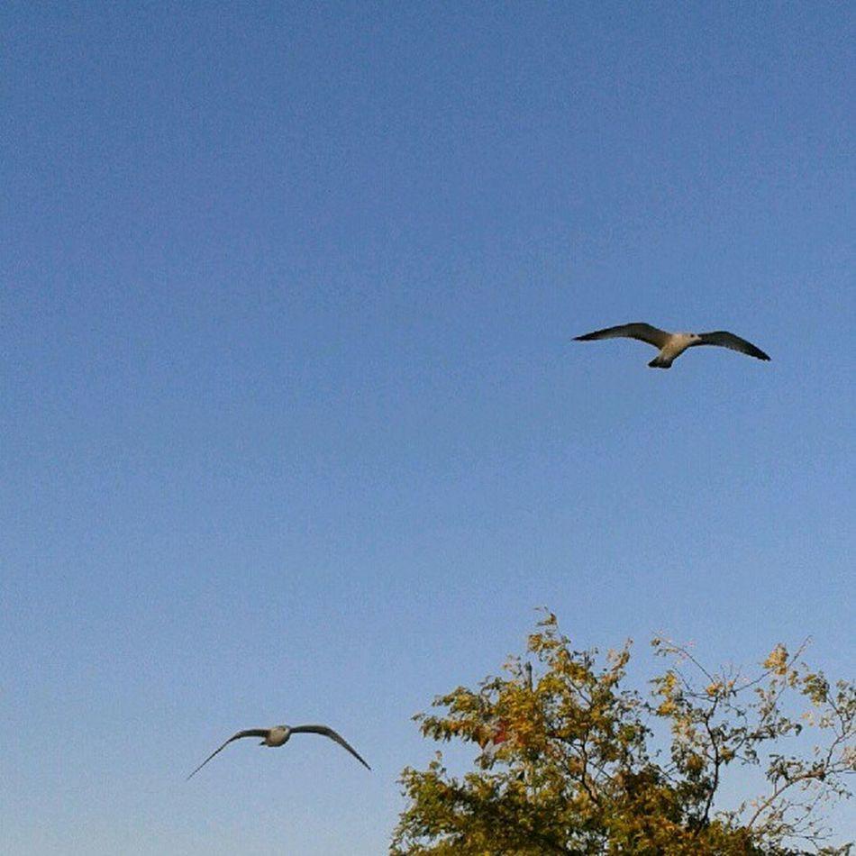 #nofilter #eveningwalk #bluesky #dusk #seagulls Dusk Seagulls Nofilter Bluesky Minimal2_nio Eveningwalk Nothinisordinary Igminimal