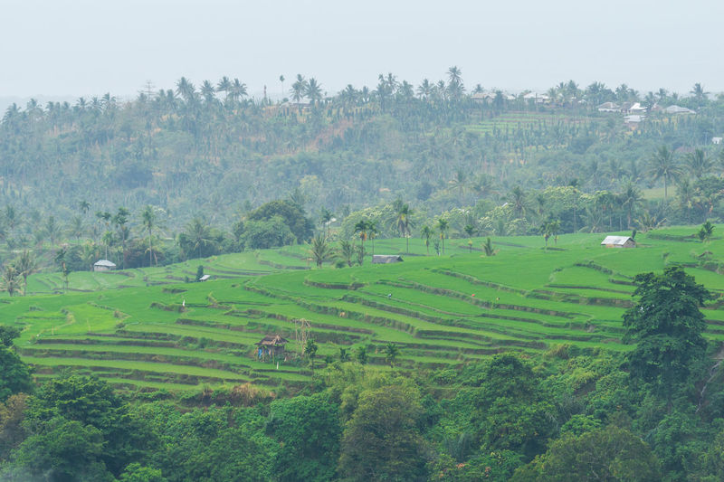 View of paddy fields near Mount Rinjani in Lombok, Indonesia Agriculture Beauty In Nature Day Field High Angle View Landscape Lombok-Indonesia Nature No People Outdoors Paddy Field Rice - Cereal Plant Rice Paddy Rinjani National Park Rural Scene Scenics Terraced Field Tree Village