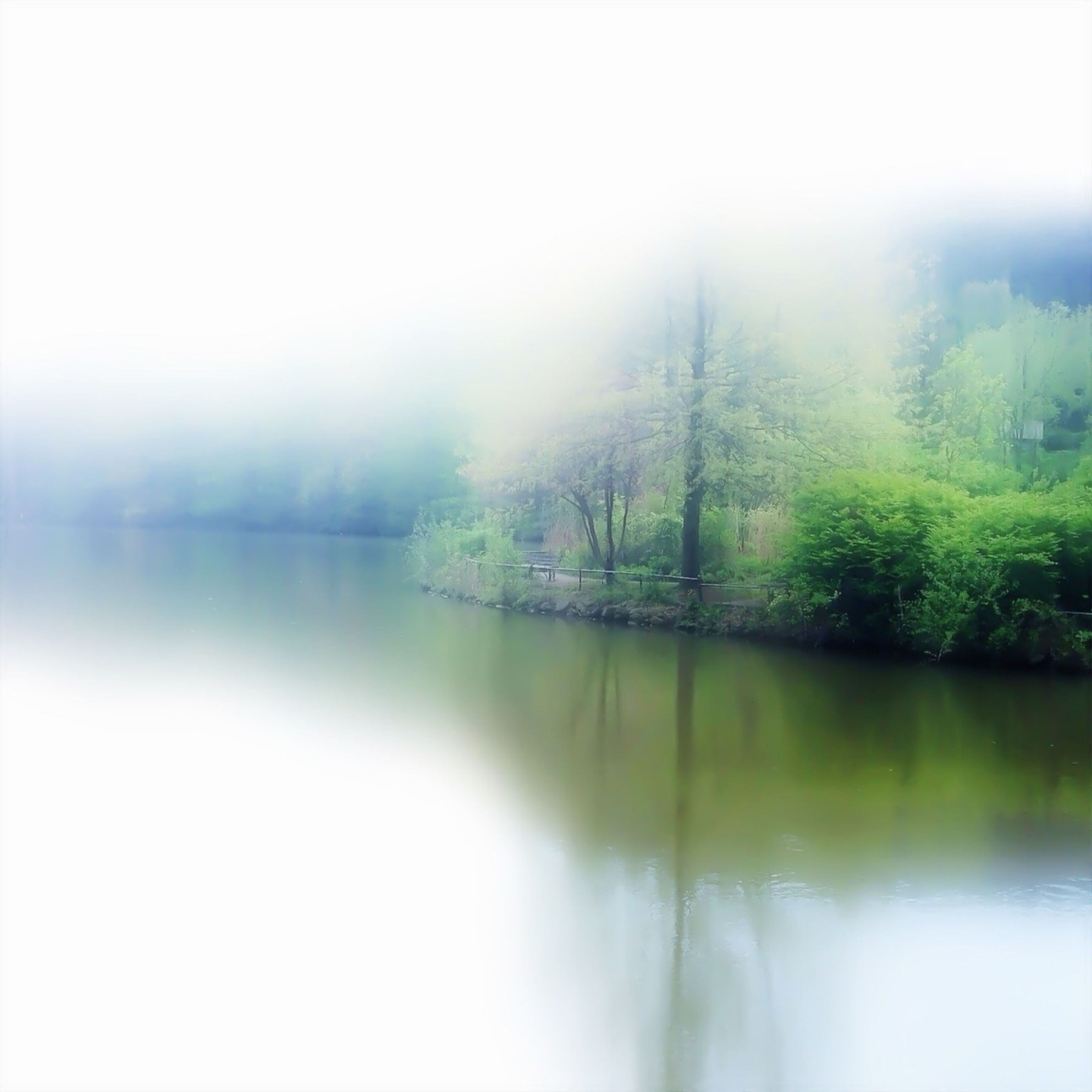 water, fog, tree, tranquil scene, tranquility, reflection, lake, foggy, beauty in nature, scenics, waterfront, nature, weather, idyllic, river, standing water, growth, day, non-urban scene