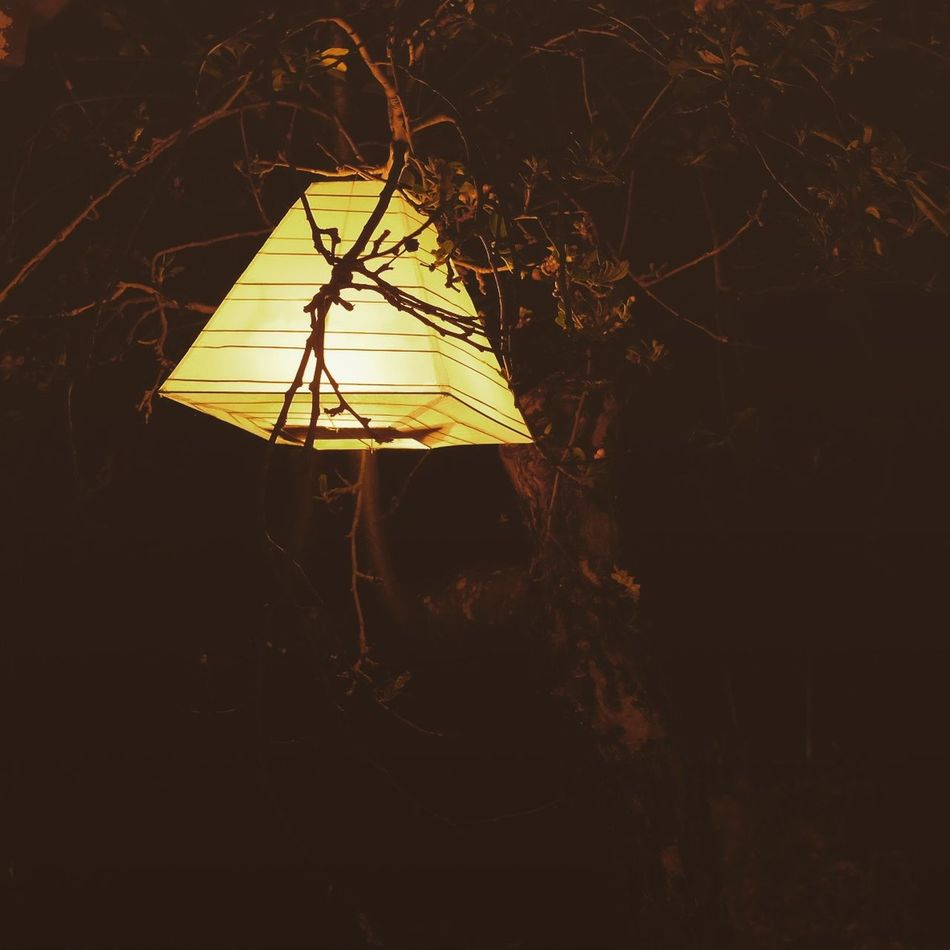 Atmospheric Mood Light Night Candle Outdoors Trees Branches Leaves 🍁 Chandelier Rice Paper No People Nature The Week On Eyem Eyemphotography EyeEm Gallery EyeEm Best Shots Candle Light Relaxing Time Night Photography