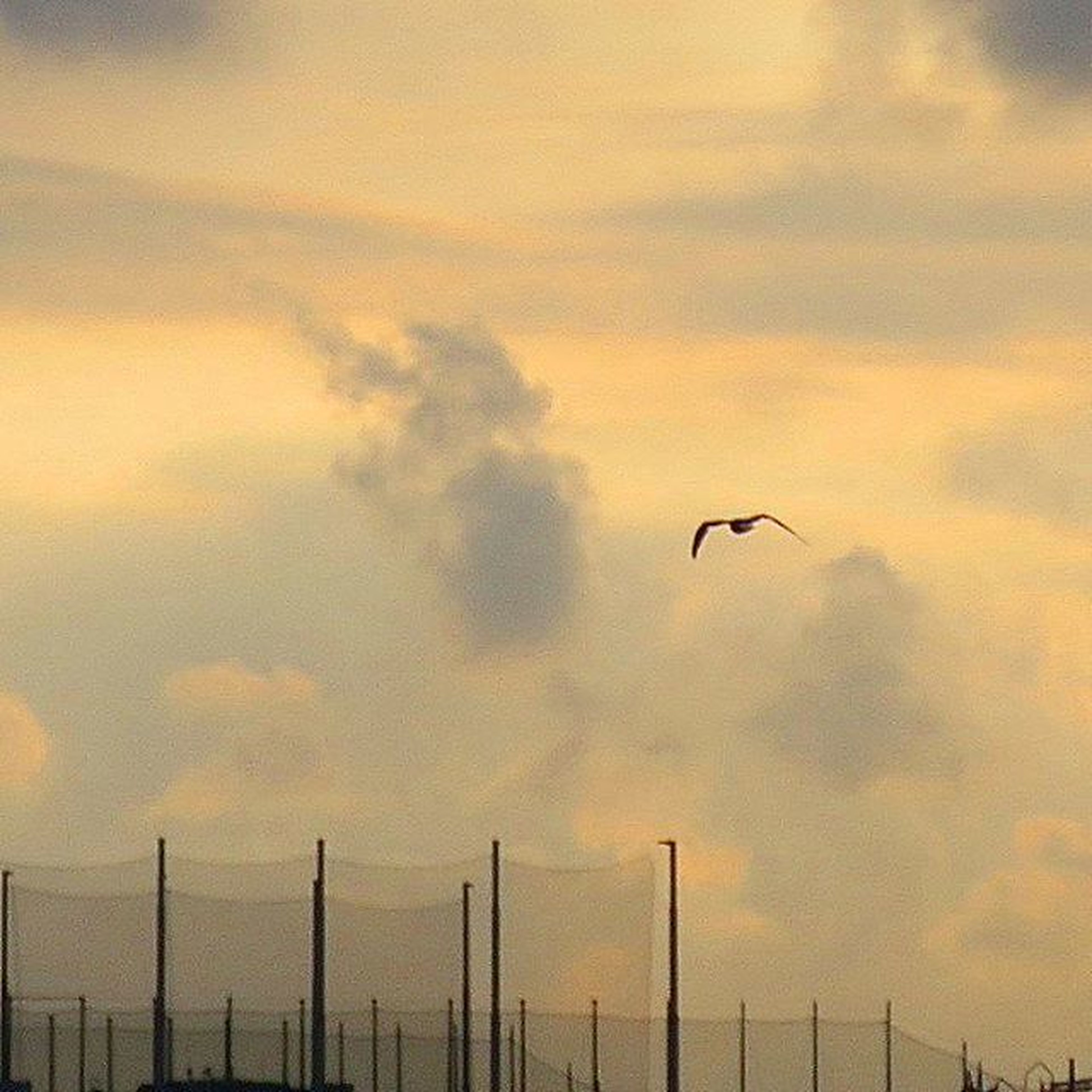 bird, sky, animal themes, cloud - sky, flying, animals in the wild, low angle view, sunset, cloudy, wildlife, one animal, silhouette, nature, cloud, perching, mid-air, beauty in nature, scenics, outdoors, tranquility