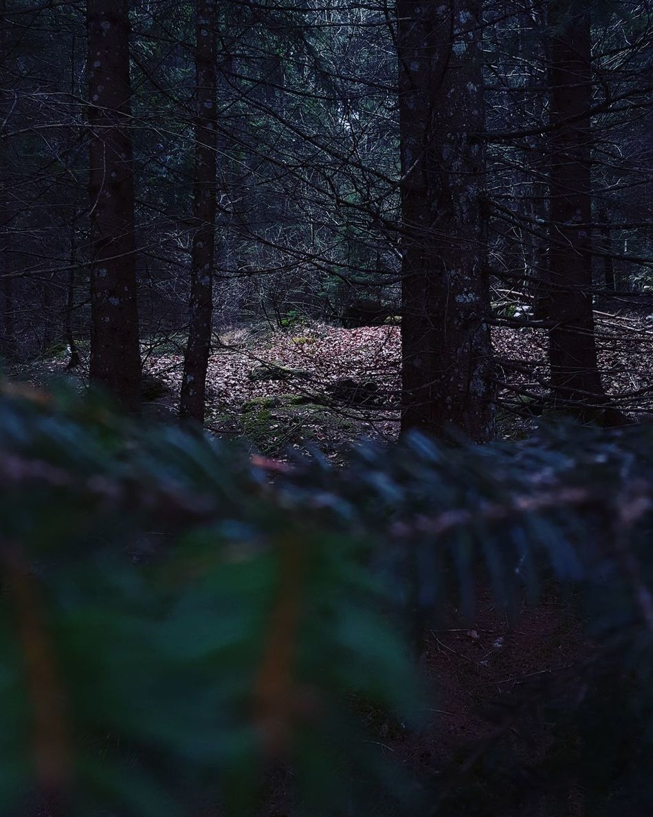 Forest. Nature No People Outdoors Forest Photography Forest Trees Trees And Nature Nature Photography Photo Of The Day Photography Cellphone Photography Asiago Italy🇮🇹 Darkness And Light Shooting