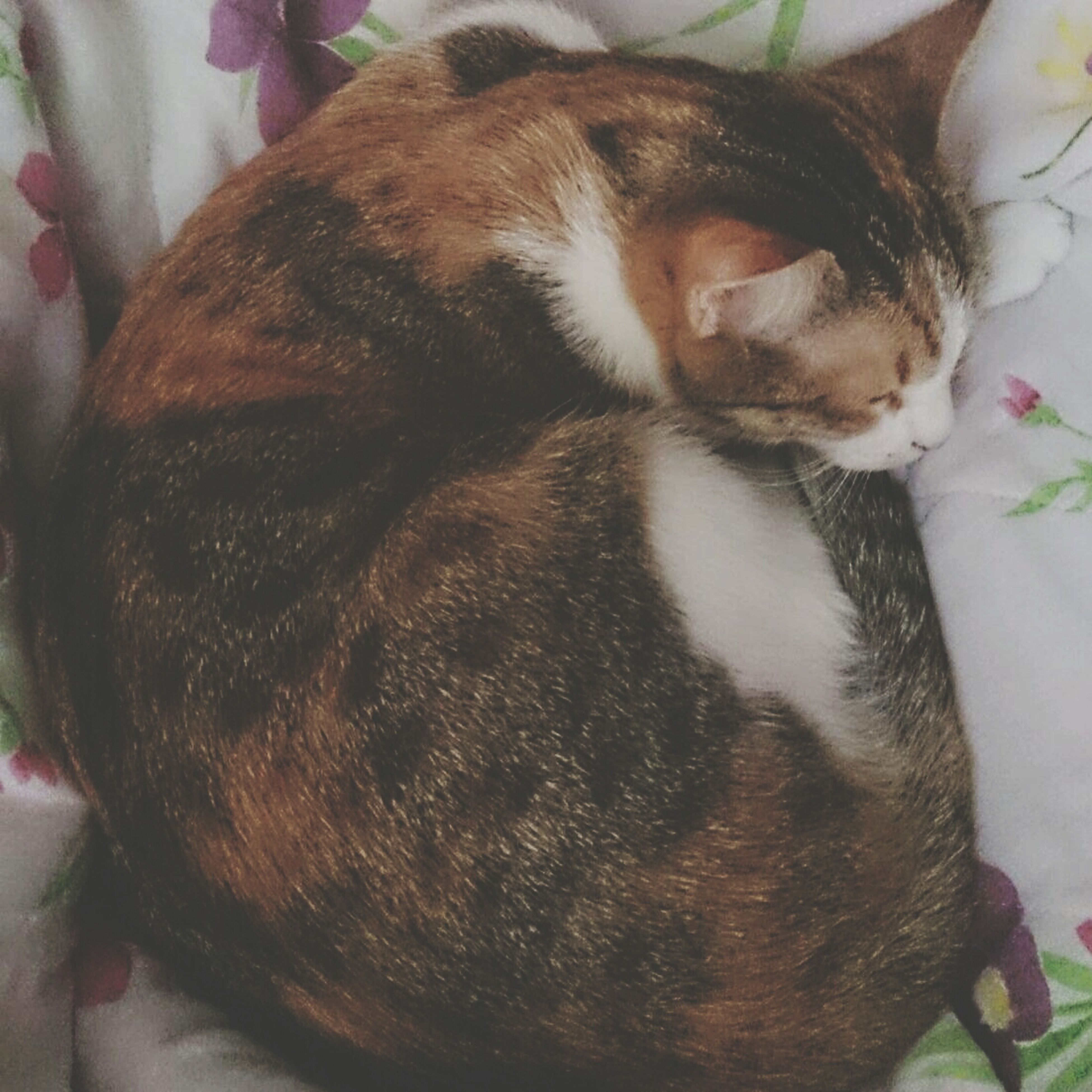 domestic animals, pets, animal themes, one animal, mammal, indoors, dog, sleeping, relaxation, resting, domestic cat, lying down, bed, cat, high angle view, eyes closed, home interior, close-up, cute, feline