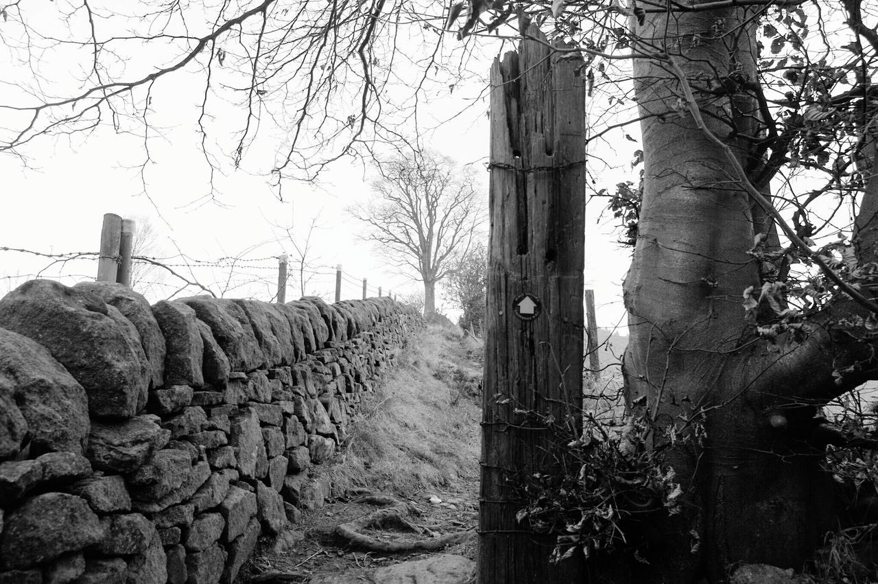 Tree Nature Beauty In Nature No People Day Landscape Freshness Post Path Calderdale Tranquil Scene Cold Daisy Bank January Winter Scenics Beauty In Nature Outdoors Mytholmroyd Nature Tree Black And White Monochrome Landscape Black And White Photography Perspectives