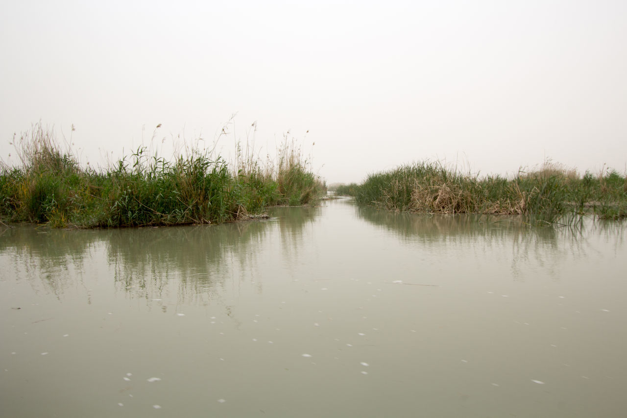 Image marshes of Iraq in Dhi Qar province, which is located south of Iraq, Show where water bodies and Cane papyrus. Al Basrah Iraq Animals Baghad Baghdad Baghdad , Lraq Baghdad Streets Baghdad, Lraq Baghdadcity Beautiful Animals  Beautiful Nature Buffalo Cane Dhi Qar EyeEm Nature Lover Fishermen Fishermen Boat Fishermen's Life Fishermenboat FisherMens Fishermenvillage Iraq Iraq . Baghdad Iraq_photo Iraqi  Iraqwar Marshes Nature Nature_collection Papyrus Pic Iraq Water Water_collection ıraq