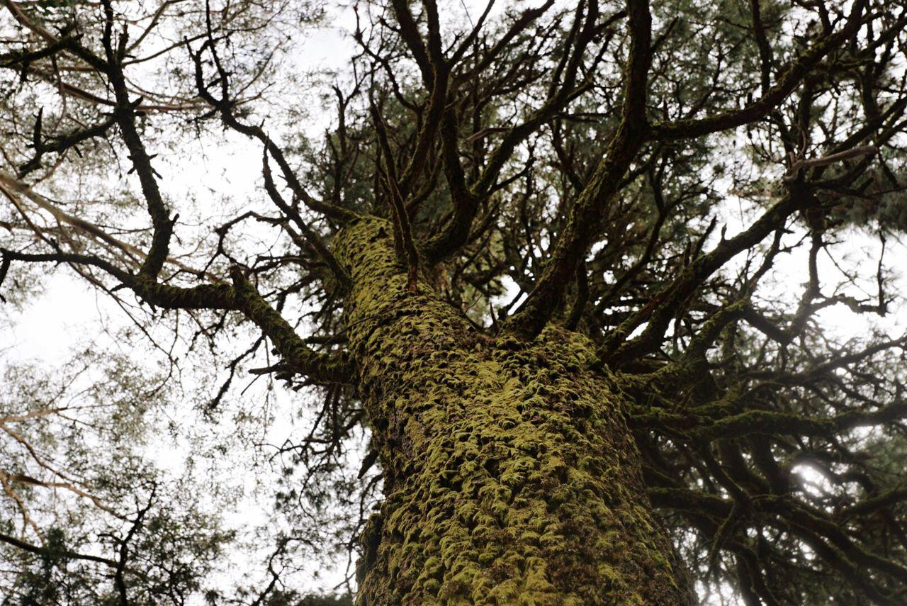 Beautiful stock photos of elfen, Arona, Branch, Day, Growth