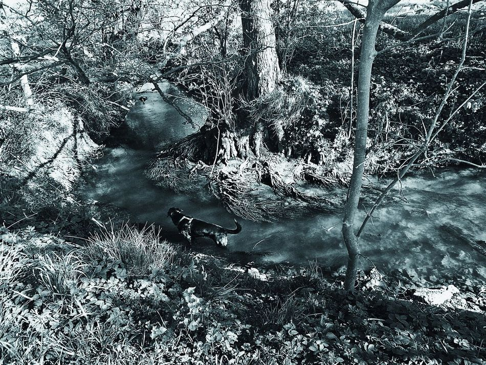 Welcome To Black Down By The Creek Dog Taking A Bath Light And Shadow First Summer Day Animal Themes Nature Dog Tree Tree Roots  Roots Reflections Water No People Day Outdoors Langenselbold Germany🇩🇪 Landscape Black And White Photography Black&white The Secret Spaces