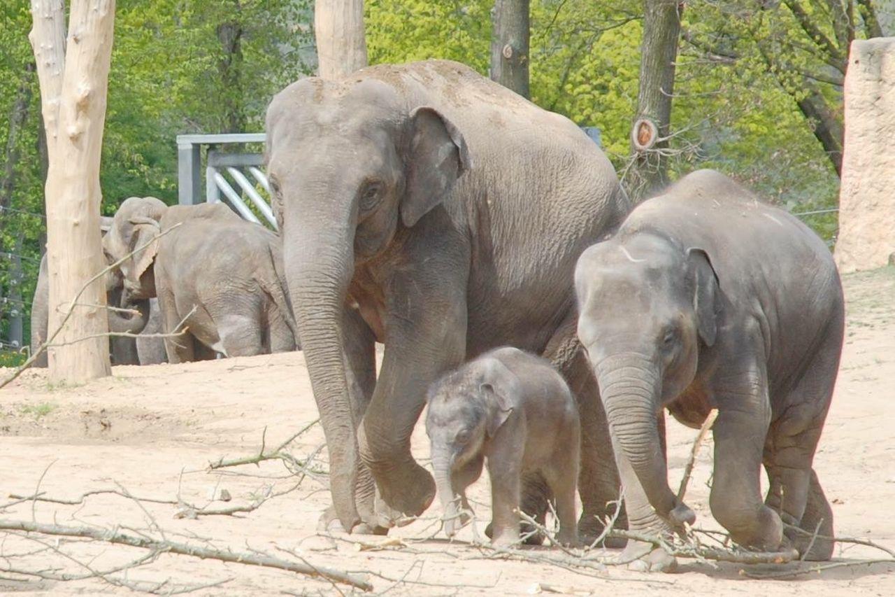Baby Elephant Zoo Animals Wildlife Mothernature