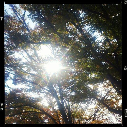 Japan Sun #sky #shonan