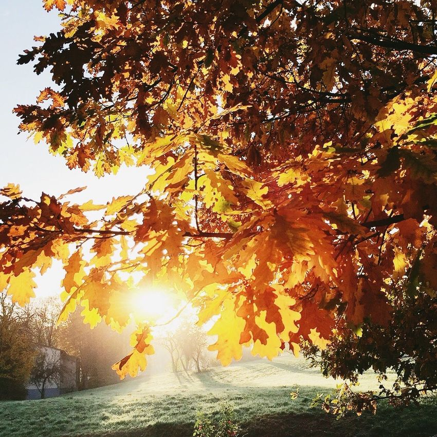 Nature Sunrise Autumn Colors Morning Sun Nature_collection EyeEm Nature Lover Naturelovers Trees The Great Outdoors - 2015 EyeEm Awards Nature On Your Doorstep