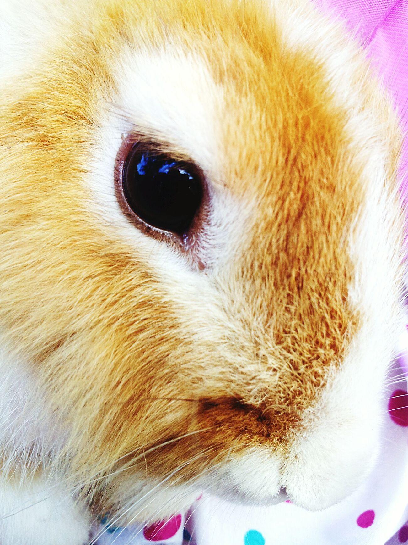 Rabbit ❤️