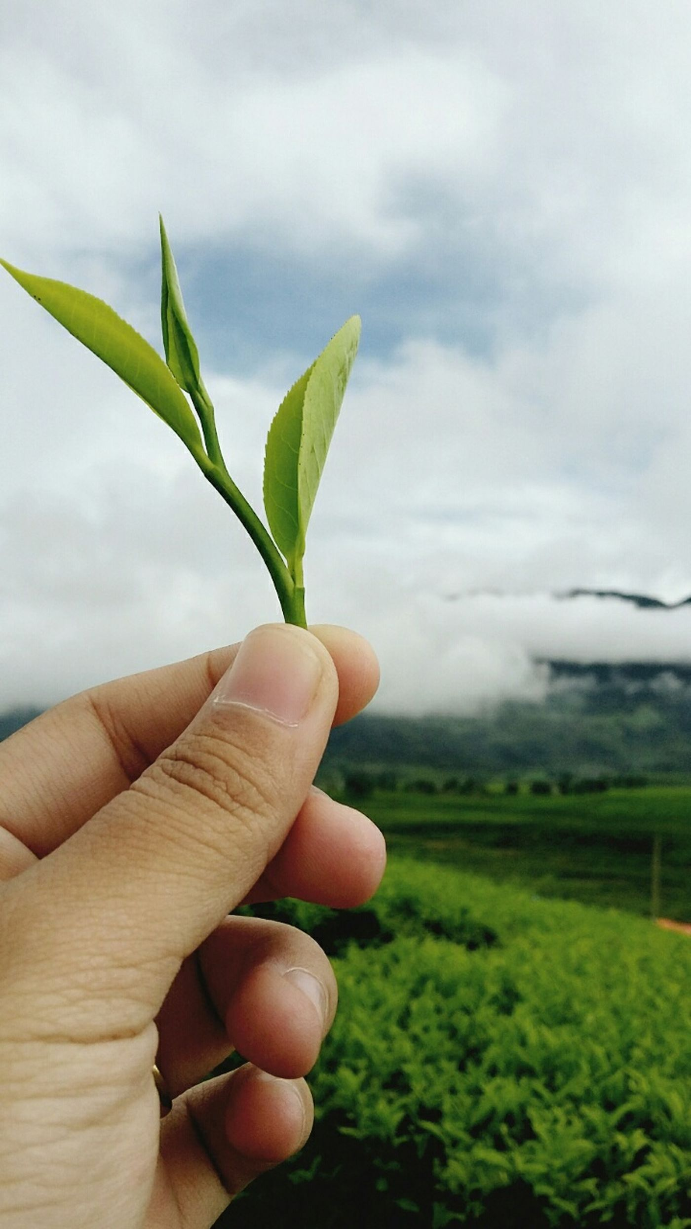 Explore Indonesia Padangsolok EyeEm Nature Lover The Potraitist - 2015 EyeEm Awards