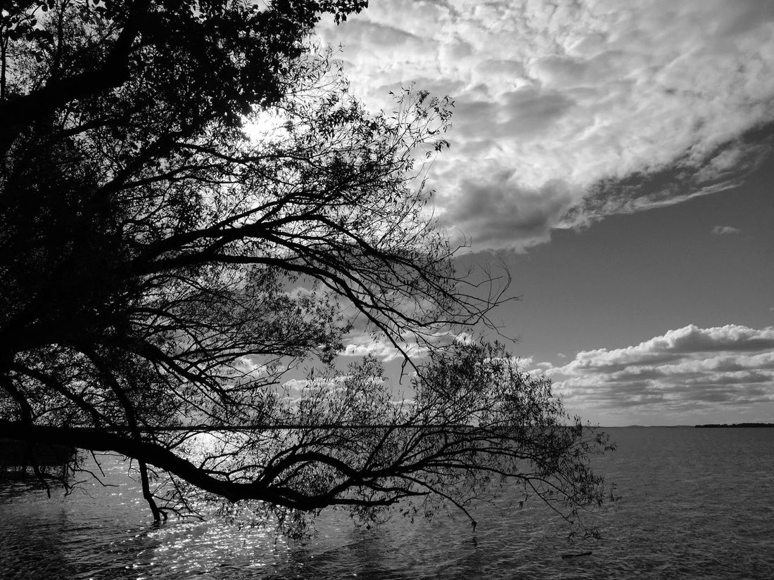 Trees Branches Tree Branches Water Lake River Calm Blackandwhite Perfect