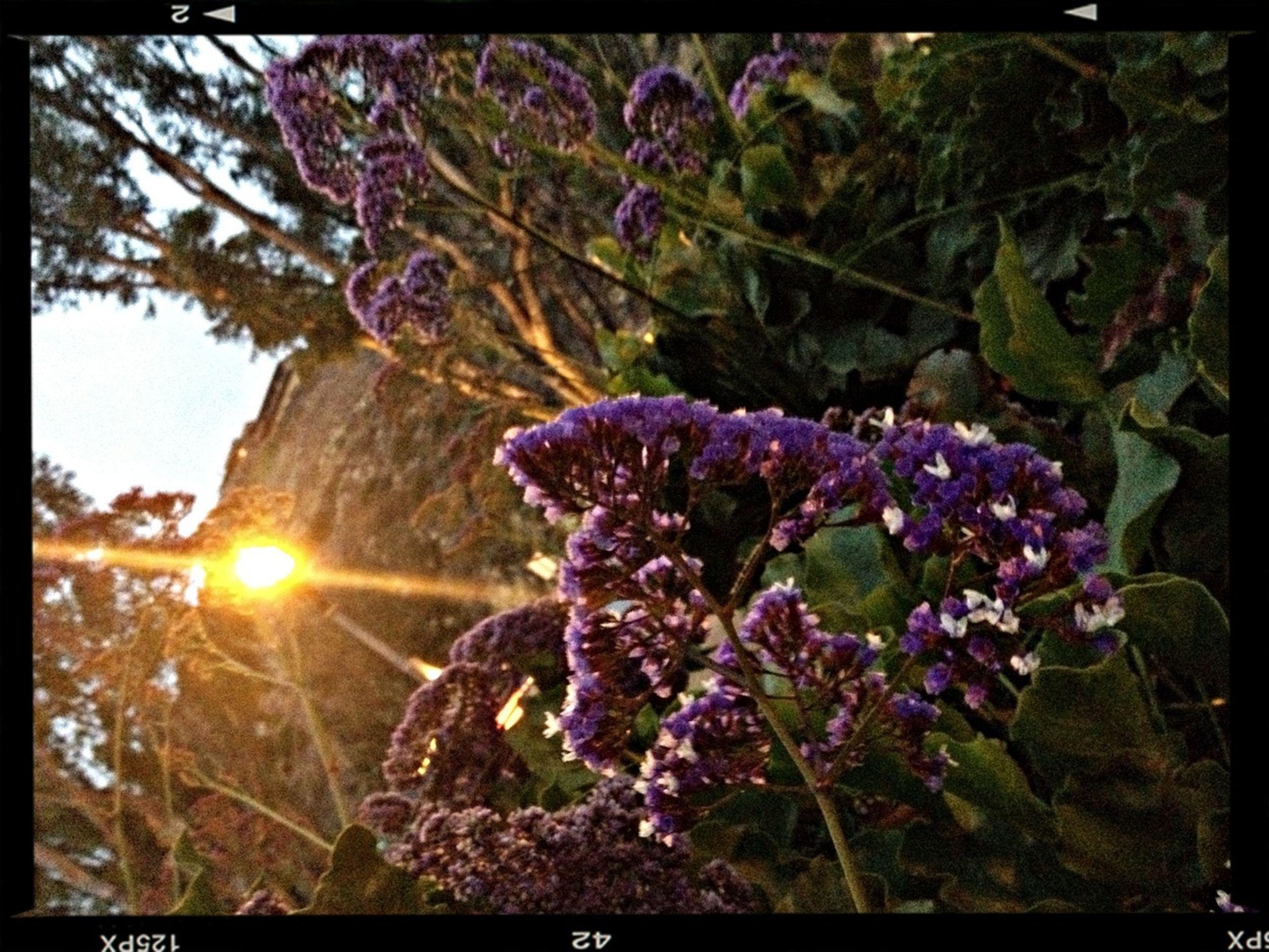 EyeEm Best Shots - Sunsets + Sunrise
