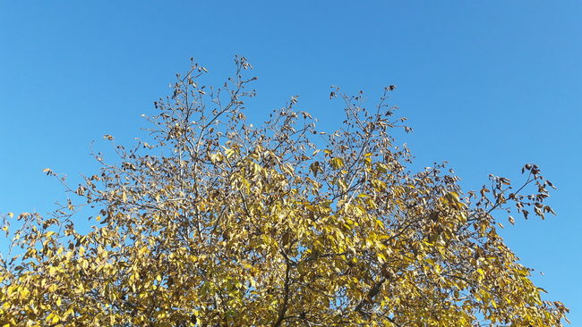 Nature Tree No People Sky Horizontal Beauty In Nature Fallen Leaves Fall Fall Beauty Fall Colors Fallen Tree