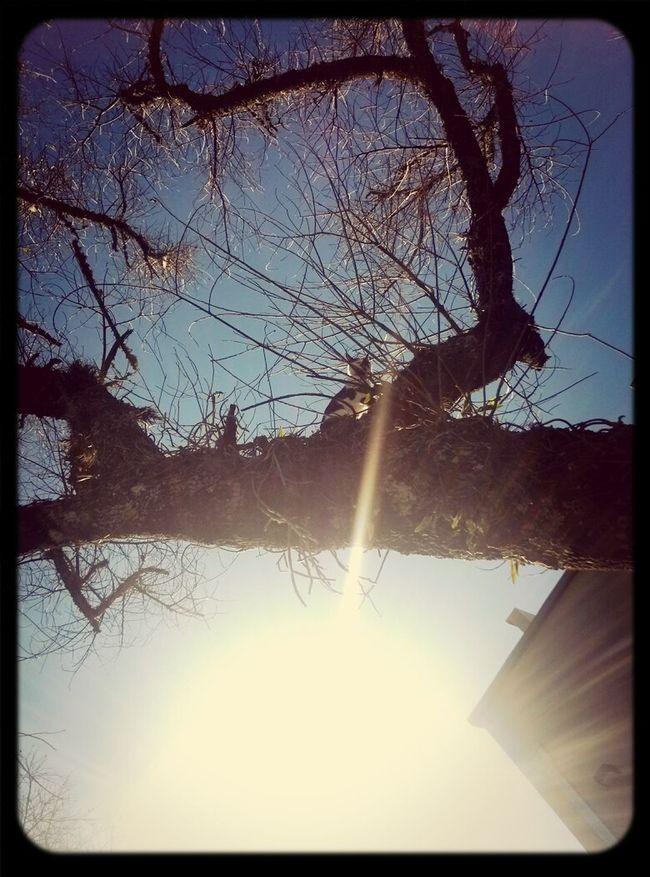 Tango en el arbol. árbol Gatos