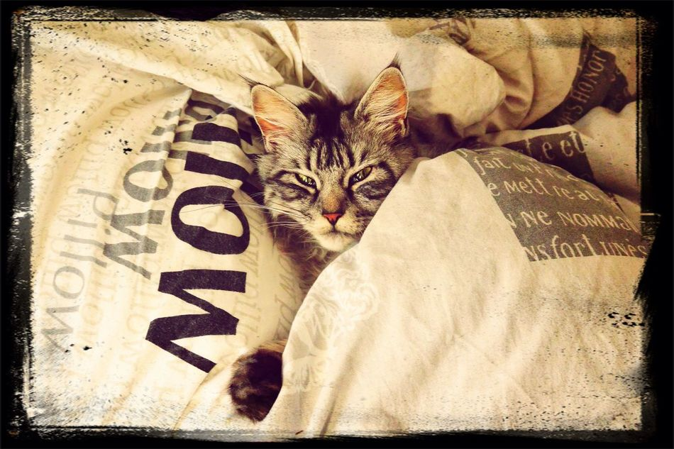 Cat Animals Good Morning
