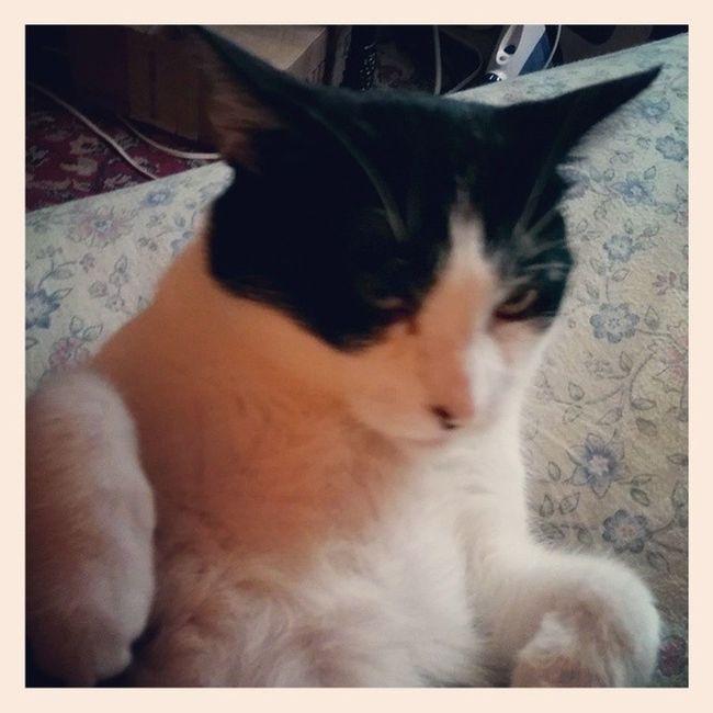 Ming Ming isn't a morning kinda cat Catsofinstagram Cats Blackandwhitecats Themingming lazycatdaze familiar
