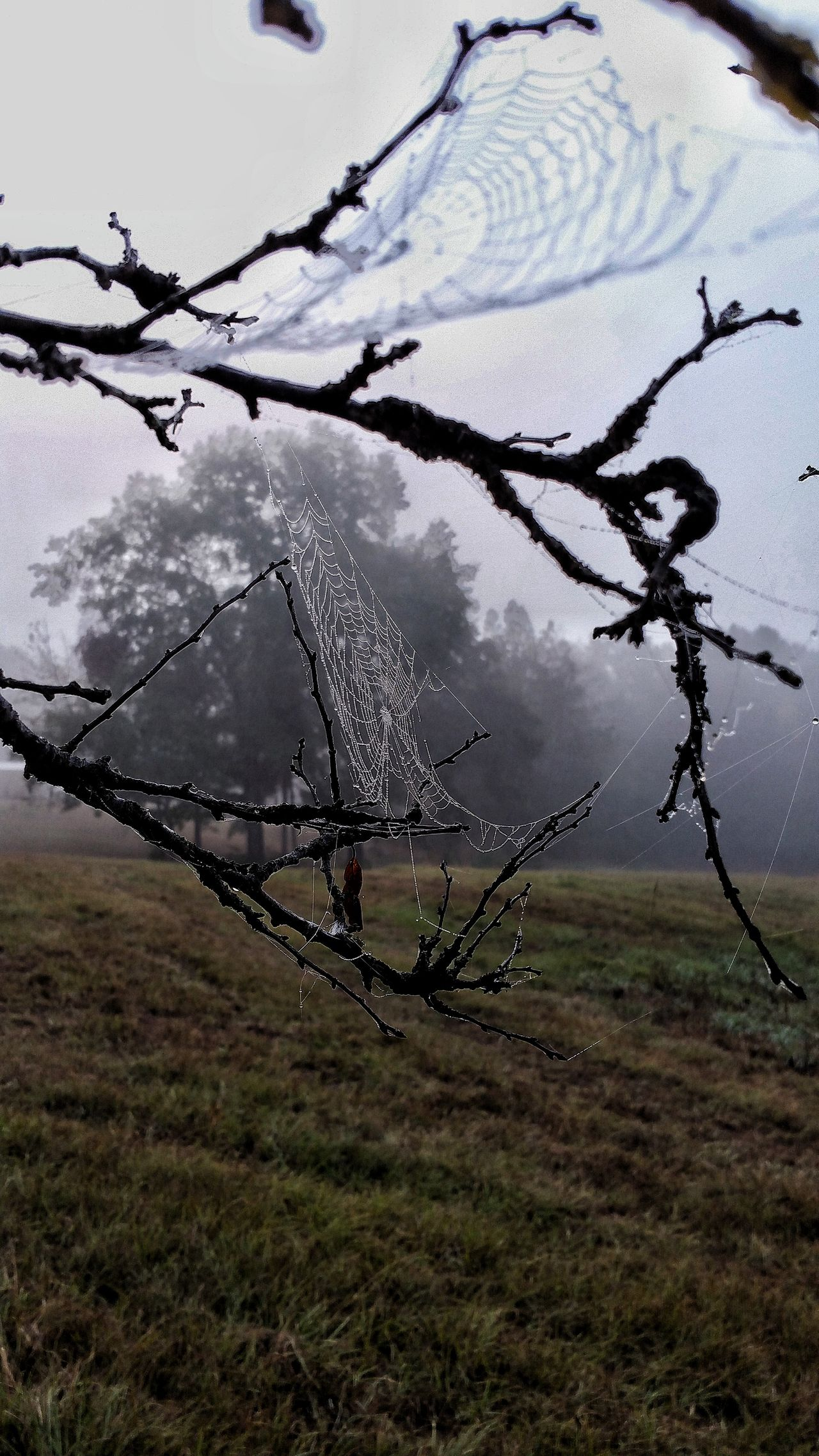 Foggy Foggy Weather Foggy Morning Misty Morning Tranquil Scene Beauty In Nature Tranquility Spiderweb Web Bare Tree Fall Early Morning Spider Web, Dew, Morning, Dew On Spider Webs Lonely Scene